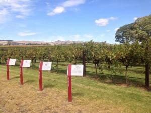 Vignobles Adelaide